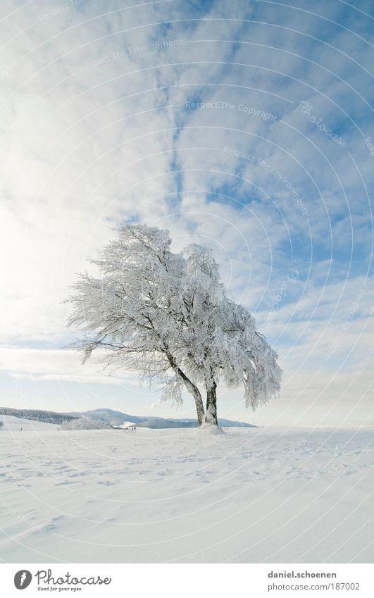 endlich kalte Finger !! Himmel weiß Baum Sonne blau Winter Ferne Schnee Eis Frost Schönes Wetter Textfreiraum Schwarzwald
