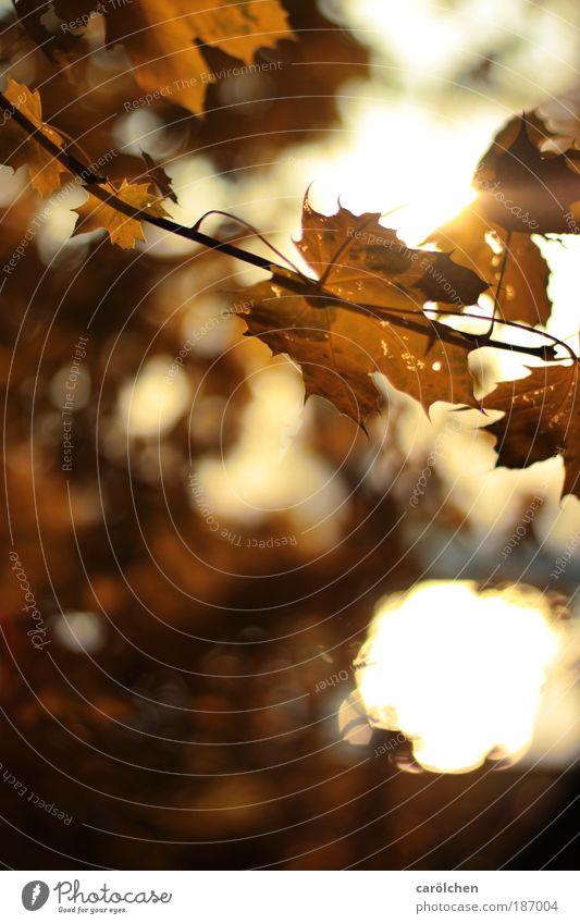 *25* Lichtmomente Natur Sonne Landschaft Blatt dunkel schwarz Umwelt Herbst grau braun glänzend Park leuchten gold Sträucher Schönes Wetter