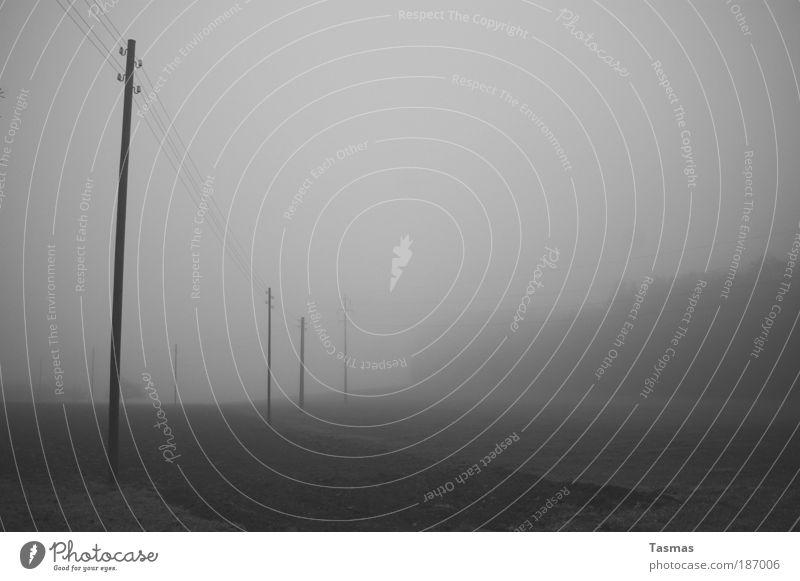 Nebeltage ruhig Wald Herbst grau Landschaft Feld Elektrizität Gelassenheit Langeweile Vorsicht Schwarzweißfoto Hochspannungsleitung