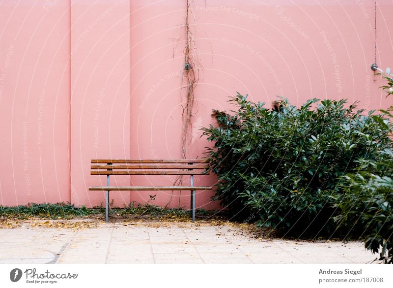 Setz dich! Natur grün Pflanze Blatt ruhig Erholung Wand Gefühle Stil Stein Mauer Denken Zufriedenheit rosa Fassade Design