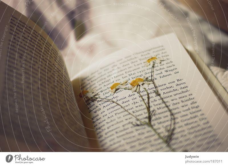Lesezeichen harmonisch Erholung ruhig Natur Blume Kamille Buch Buchstaben träumen alt schön gelb Frühlingsgefühle Romantik Duft Glück Hoffnung rein Blüte platt