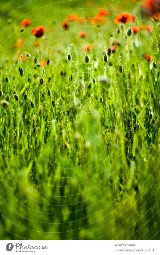 Natur Pflanze Erholung Umwelt Blüte Gefühle Frühling Wetter Feld Erde Fröhlichkeit Energie einzigartig Schönes Wetter Warmherzigkeit Romantik