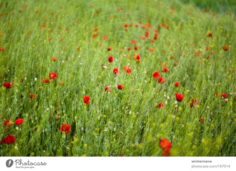 Natur Pflanze Freude Einsamkeit Erholung Gefühle Frühling Feld Zeit Hoffnung Romantik Wandel & Veränderung Sehnsucht Warmherzigkeit Schönes Wetter Begierde