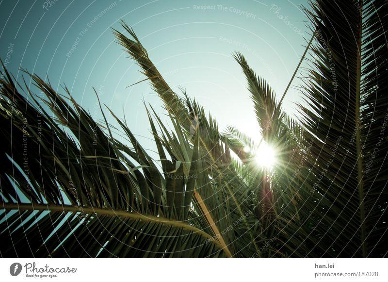 Sommer! Textfreiraum unten Textfreiraum oben Menschenleer Farbfoto Sonnenlicht Gegenlicht Himmel Schönes Wetter Sonnenstrahlen Pflanze Palme Blatt Vignettierung