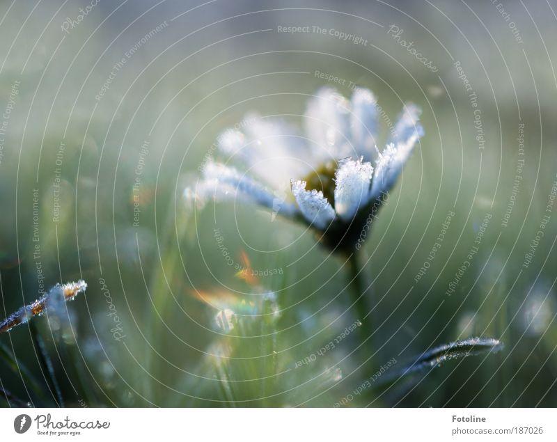 Wie ein Traum Umwelt Natur Landschaft Pflanze Urelemente Erde Wasser Herbst Winter Eis Frost Blume Gras Blüte Park Wiese Coolness frisch hell kalt nah natürlich