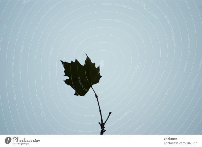 Irgendwie dunkel! Umwelt Natur Pflanze Luft Himmel Wolkenloser Himmel Herbst Wetter Schönes Wetter Baum Blatt Park Coolness hell hoch kalt blau schwarz einsam