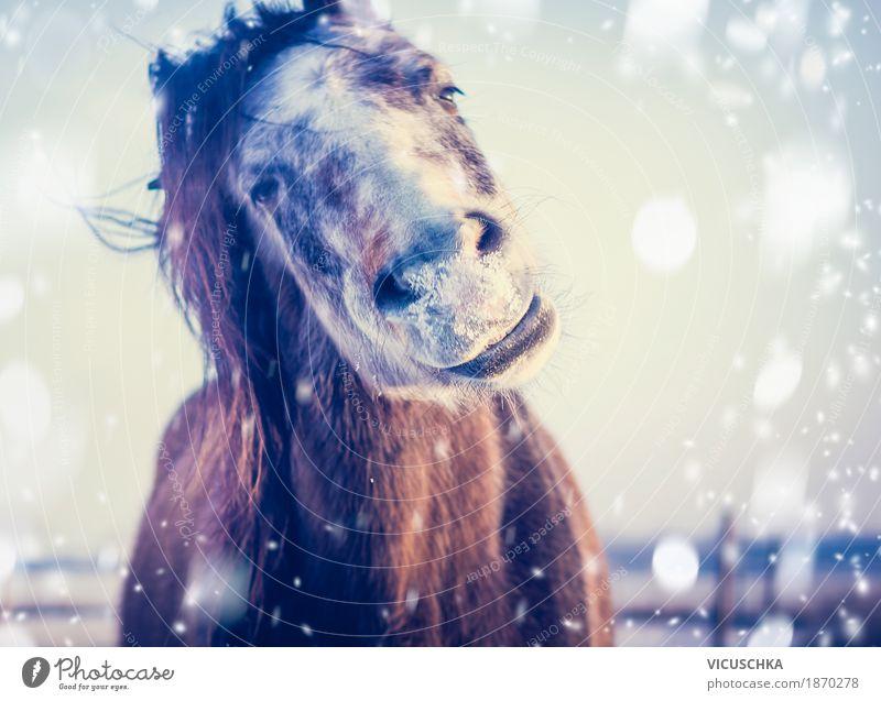 Pferd genießt Winter und Schnee Lifestyle Freude Natur Himmel Schönes Wetter Tier 1 Design Frost grinsen Humor Porträt Lächeln Farbfoto Außenaufnahme
