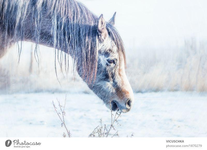 Winterpferdchen Lifestyle Natur Wiese Feld Tier Pferd 1 Pferdekopf Schnee kalt Gras Farbfoto Außenaufnahme Textfreiraum links Silhouette