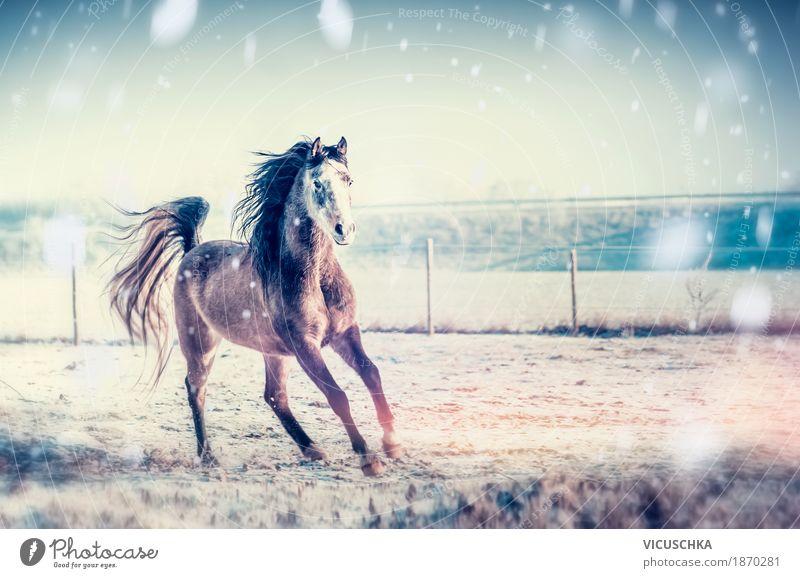 Winterspaß mit Pferde Lifestyle Design Freizeit & Hobby Schnee Natur Himmel Schönes Wetter Wiese Feld Tier 1 rennen galoppieren Farbfoto Außenaufnahme
