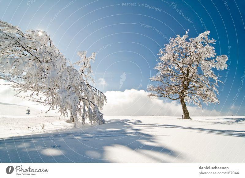 schön kalt !!! Himmel blau weiß Baum Ferien & Urlaub & Reisen Sonne Winter Einsamkeit Schnee hell Eis Klima Ausflug Tourismus Frost