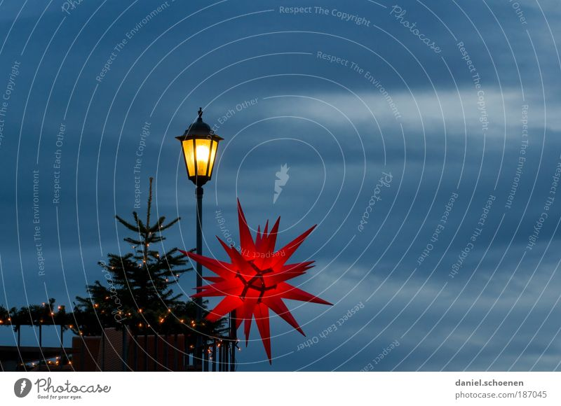Freiburger Weihnachtsstimmung Weihnachten & Advent Himmel blau rot gelb Lampe Licht Stern (Symbol) Weihnachtsbaum Dekoration & Verzierung Weihnachtsdekoration Weihnachtsstern