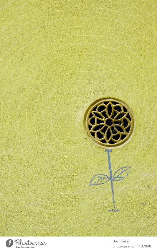 Hauswandzüchtung alt blau Pflanze Blume Freude gelb Wand Graffiti Stein Kunst ästhetisch Wachstum außergewöhnlich einzigartig Zeichen trashig