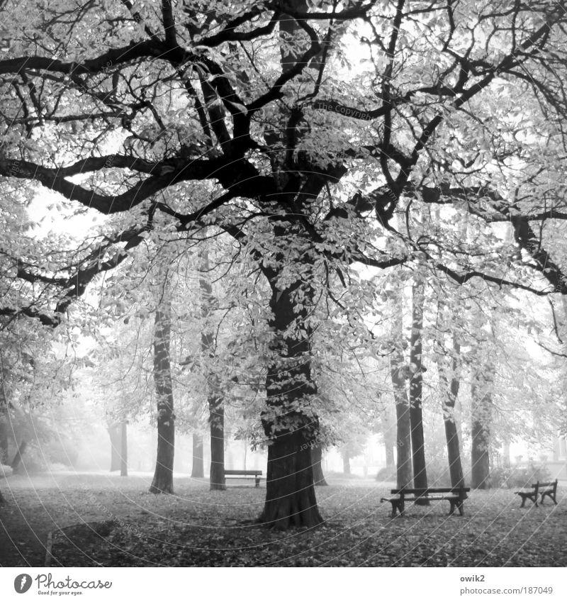 Ruhetag Natur Landschaft Pflanze Erde Luft Wasser Herbst Klima Wetter Schönes Wetter Nebel Baum Gras Blatt Wildpflanze Herbstlaub Laubbaum Eiche Park Bautzen