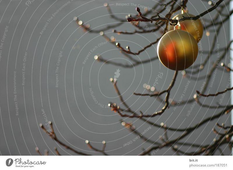 FRÜHTAU Feste & Feiern glänzend Weihnachtsdekoration Weihnachtsbaum Christbaumkugel Kugel Tau Baum Ast Weihnachten & Advent Wand Beton Mauer grau Vorfreude gold