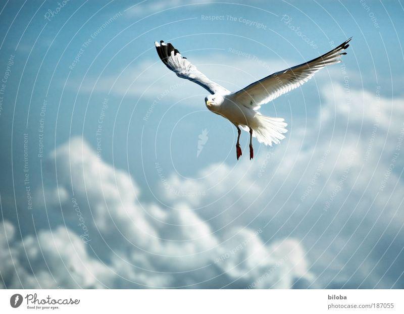 190 Flugstunden Umwelt Natur Urelemente Luft Wassertropfen Wolken Herbst Klima Wetter Wind Küste Nordsee Tier Wildtier Vogel Tiergesicht Flügel Coolness frei