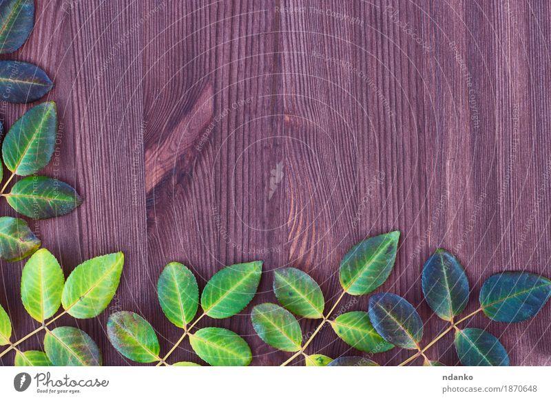 Hölzerner brauner Hintergrund mit grünem und gelbem Urlaub Natur Pflanze Blatt Herbst natürlich Holz Aussicht Top