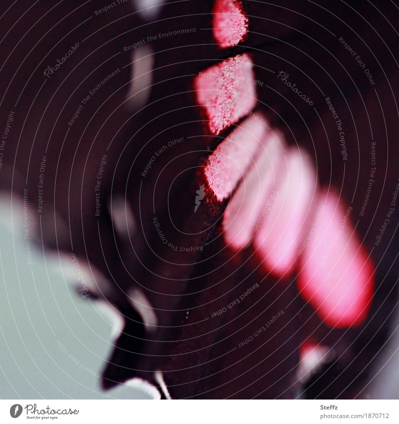 colour your wings Natur Schmetterling Flügel Edelfalter nah schön rosa schwarz Farbe Symmetrie Design Inspiration ästhetisch abstrakt Muster Strukturen & Formen