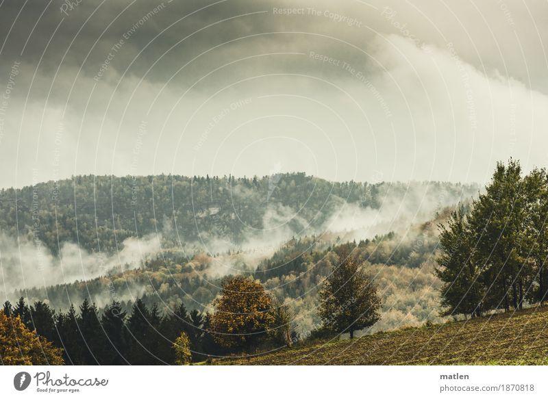 Wallungen Natur Landschaft Pflanze Himmel Wolken Gewitterwolken Horizont Herbst Wetter schlechtes Wetter Nebel Baum Gras Wiese Wald Hügel Berge u. Gebirge