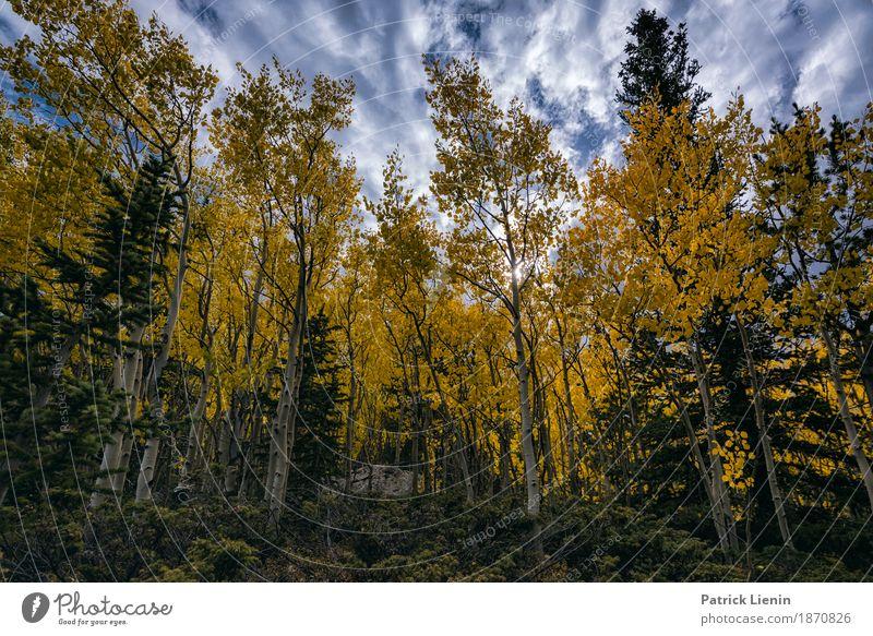 Himmel Natur Ferien & Urlaub & Reisen Farbe schön grün Baum Landschaft Wolken Wald Berge u. Gebirge Umwelt Herbst Felsen Wetter Erde