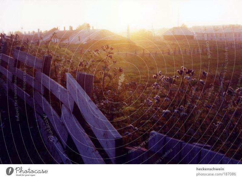 Solowki Natur Sommer ruhig Haus Wiese Gras Landschaft Feld Horizont Insel Sträucher Sehnsucht Weide Zaun Russland Heimweh