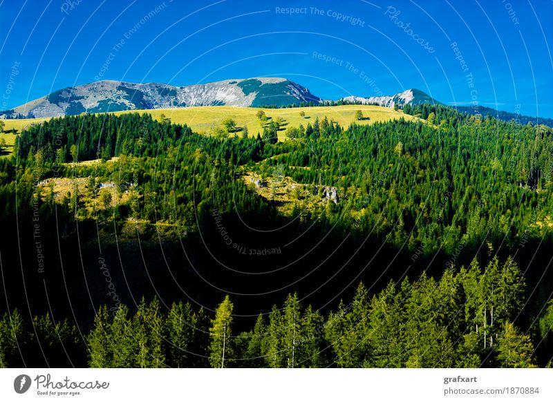 Alpine Landschaft mit Bergen und Wäldern in Österreich Berge u. Gebirge Alpen Wald alpin Aussicht Einsamkeit erhaltung Erholung Felsen Forstwirtschaft Himmel
