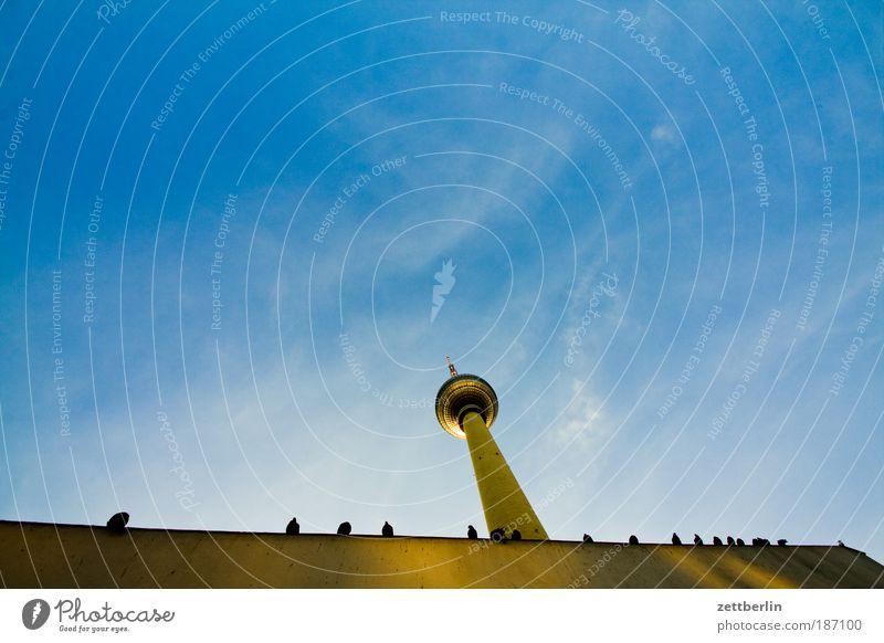 Tauben Berlin Hauptstadt alex Alexanderplatz Berliner Fernsehturm funk- und ukw-turm telespargel Wahrzeichen Bauwerk Architektur Froschperspektive Himmel Wolken