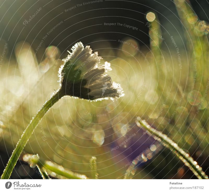 Eisblume Natur Wasser weiß grün Pflanze Winter kalt Herbst Wiese Blüte Park Landschaft hell Wetter Umwelt Erde