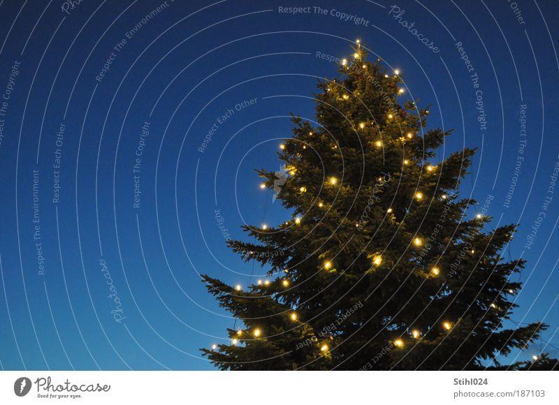 O Tannenbaum! Winter Wolkenloser Himmel Nachthimmel Baum Dekoration & Verzierung Kerze dunkel Kitsch retro blau schwarz Stimmung Hoffnung Glaube Heimweh