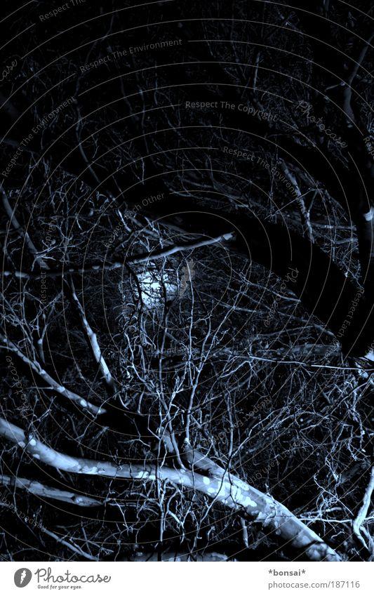 blair witch Mond Herbst Baum Wald Holz leuchten alt bedrohlich dunkel fantastisch gruselig kalt schwarz weiß Stimmung Angst Natur erleuchten Beleuchtung
