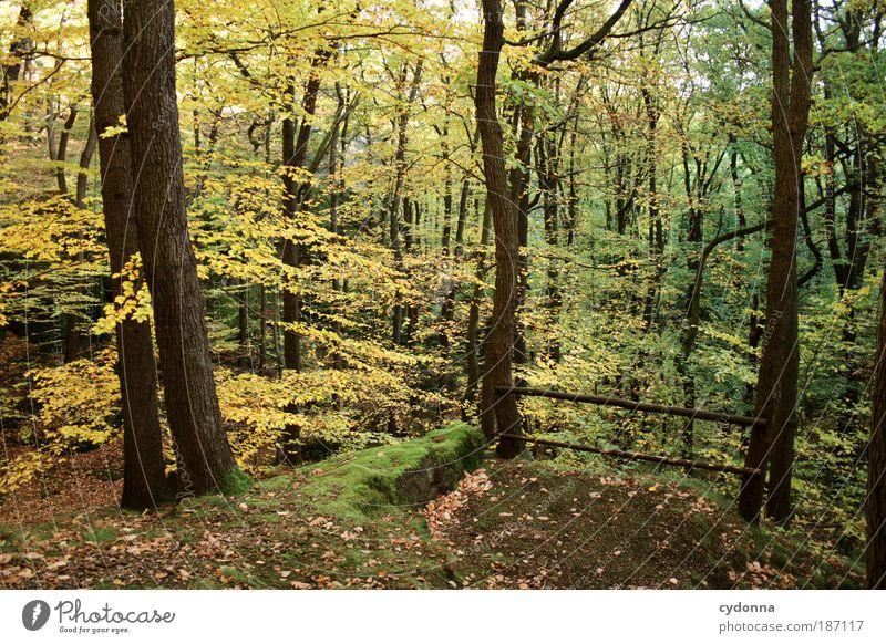 Aussichtspunkt Leben harmonisch Wohlgefühl Erholung ruhig Umwelt Natur Landschaft Herbst Wind Baum Blatt Wald Bewegung einzigartig Freiheit Idylle schön träumen
