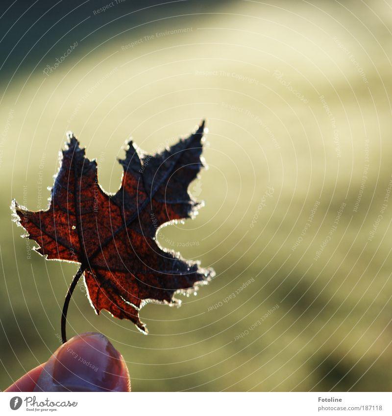 Zeig ich Euch Mensch Finger Umwelt Natur Pflanze Urelemente Wasser Herbst Winter Klima Wetter Schönes Wetter Eis Frost Gras Blatt Park Wiese Coolness hell kalt