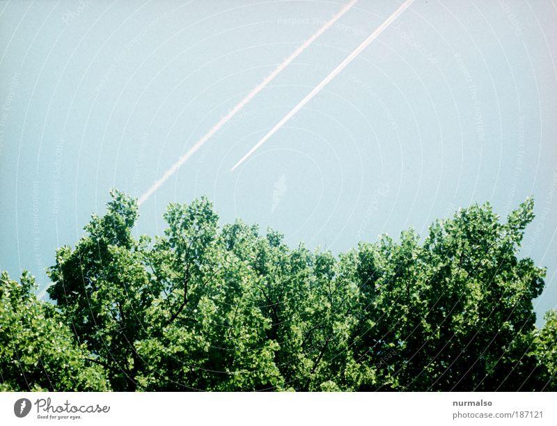 Green Logo Ferien & Urlaub & Reisen Ferne Sommer Luftverkehr Kunst Natur Wolkenloser Himmel Baum Ast Baumkrone Park Wald Flugzeug Kondenzstreiffen Zeichen