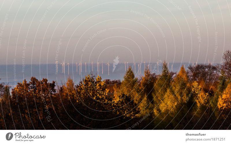 Windräder, Wald Himmel Fortschritt Zukunft Energiewirtschaft Erneuerbare Energie Windkraftanlage Umwelt Natur Landschaft Wolkenloser Himmel Sonnenaufgang