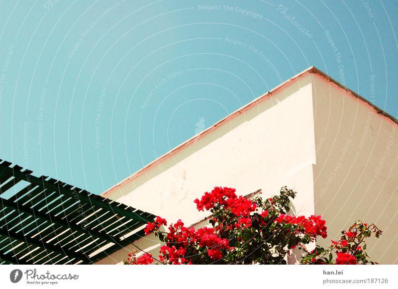 Hauswand schön Baum Blume blau Pflanze rot schwarz Wand Holz Stein Linie Fassade Rose Sträucher Dach Schönes Wetter