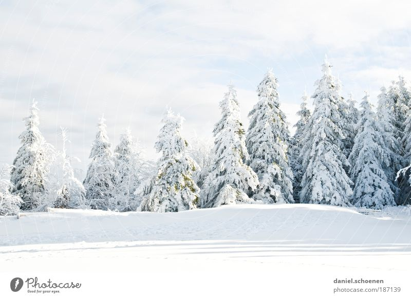 früher konnte ich mit Winter auch nichts anfangen Part 2 Natur weiß Baum Winter kalt Schnee Eis Wetter Umwelt Frost Licht Klima Tanne Schönes Wetter Klimawandel Schwarzwald