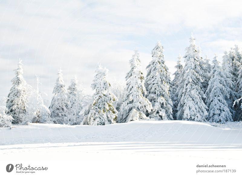 früher konnte ich mit Winter auch nichts anfangen Part 2 Umwelt Natur Klima Klimawandel Wetter Schönes Wetter Eis Frost Schnee Baum kalt weiß Tanne Schwarzwald