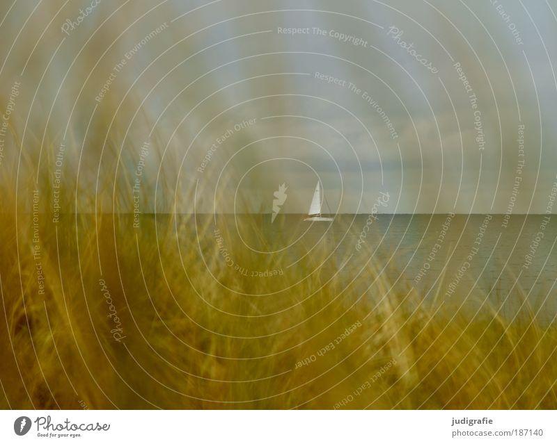 Ostsee Ferien & Urlaub & Reisen Sommer Sommerurlaub Strand Meer Umwelt Natur Landschaft Pflanze Wasser Himmel Gras Küste Schifffahrt Segelboot Stimmung Fernweh