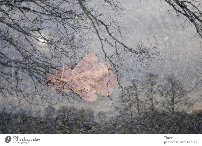 Vom Baum des Lebens fällt... Natur Himmel Baum Sonne Winter ruhig Blatt Einsamkeit dunkel Herbst Gefühle Traurigkeit Landschaft Erde Trauer Wandel & Veränderung