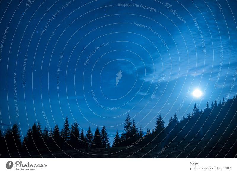 Wald von Kiefern unter Mond und blauen dunklen Nachthimmel Himmel Natur Ferien & Urlaub & Reisen Farbe weiß Baum Landschaft Wolken dunkel Berge u. Gebirge
