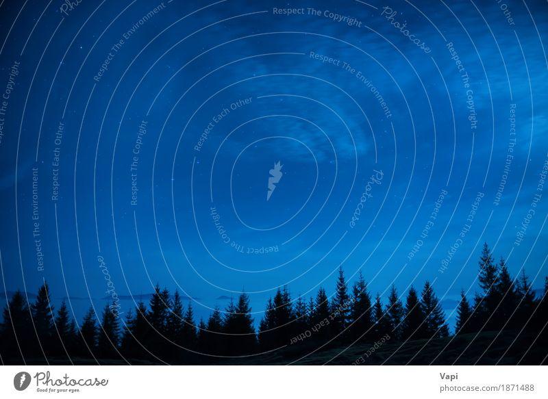 Wald von Kiefern unter blauem dunklem nächtlichem Himmel mit vielen spielt die Hauptrolle Natur Ferien & Urlaub & Reisen Farbe weiß Baum Landschaft Wolken