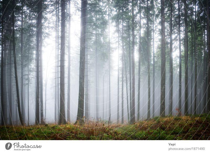 Mysteriöser Nebel im grünen Wald Tourismus Umwelt Natur Landschaft Sonnenlicht Sommer Herbst Wetter Regen Baum Gras Blatt dunkel blau braun gelb grau schwarz