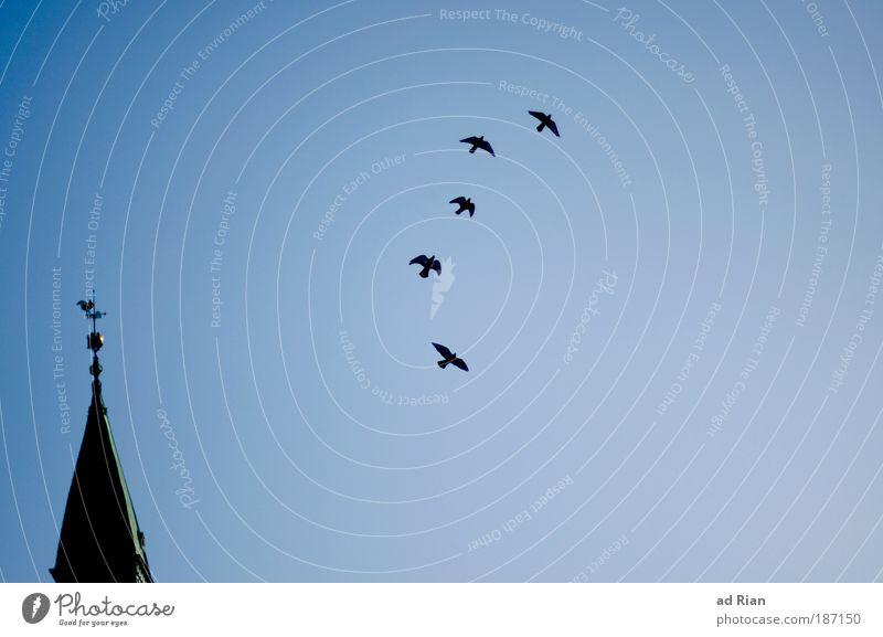 Hopenhagen Haus Religion & Glaube Gebäude Horizont Vogel elegant fliegen Energie ästhetisch Hoffnung Kirche Turm Bauwerk Unendlichkeit Skyline