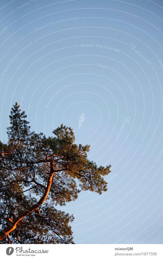 Ostsee I Himmel blau Sommer Kunst ästhetisch Baumstamm Kiefer Nadelbaum