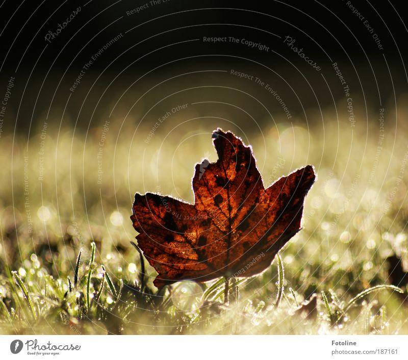 Tschüß Herbst, hallo Winter! Umwelt Natur Pflanze Urelemente Wasser Sonnenlicht Klima Wetter Schönes Wetter Eis Frost Baum Gras Blatt Park Wiese Coolness hell
