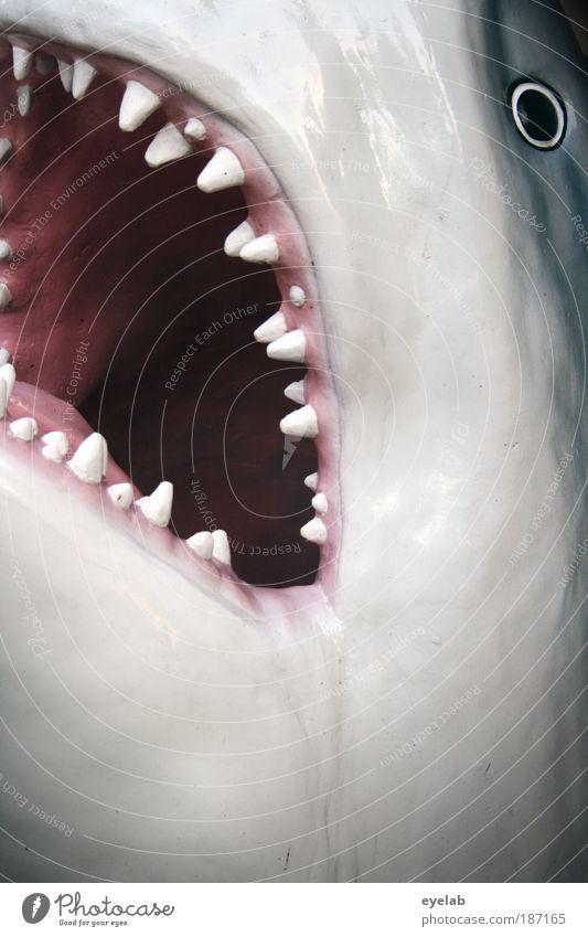 ...und die trägt er im Gesicht Tier Wildtier Totes Tier Fisch Haifisch Tiergesicht Schuppen Aquarium 1 Aggression bedrohlich dunkel glänzend gruselig Kitsch