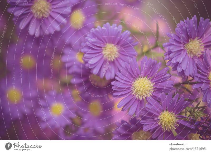 Schöne rosa wachsende Blumen, selektiver Fokus Natur Pflanze Baum Lifestyle Stil Kunst Design Abenteuer Künstler
