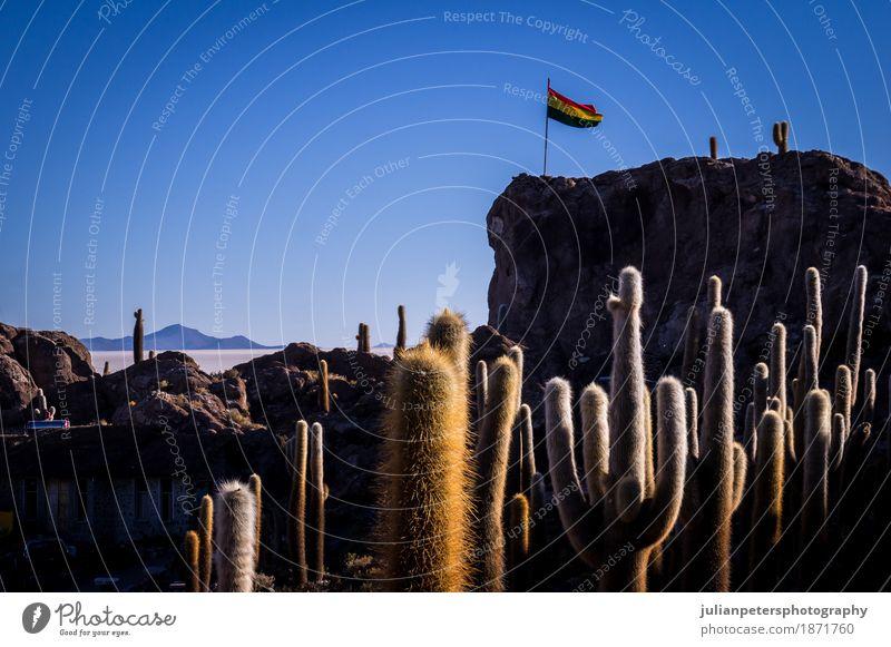 Bolivianische Flagge in Incahuasi-Kaktusinsel Uyuni Dessert Ferien & Urlaub & Reisen Sonne Insel Natur Landschaft Pflanze Himmel Hügel See Fahne wild blau gelb