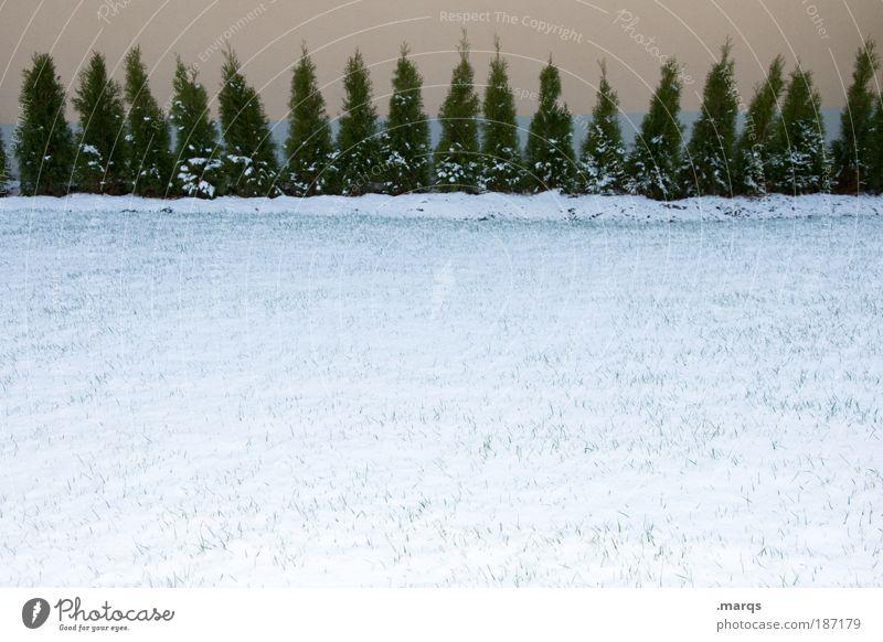 Aufstellung Natur Baum Winter kalt Schnee Gras Stil ästhetisch Wachstum Wandel & Veränderung Sträucher Urelemente Textfreiraum Willensstärke Ausdauer Ordnungsliebe