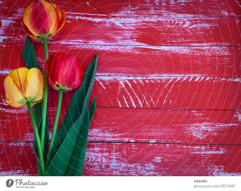 Drei Tulpen auf einem roten hölzernen Hintergrund Dekoration & Verzierung Ostern Hochzeit Geburtstag Mutter Erwachsene Frühling Blume Blüte Blumenstrauß Holz