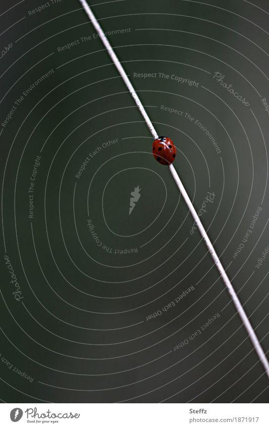 aufwärts! Natur Sommer rot Bewegung Gras Linie Halm Karriere diagonal unterwegs Käfer Symmetrie minimalistisch aufsteigen Marienkäfer
